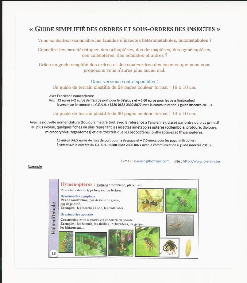 2019 - Scan pub insectes